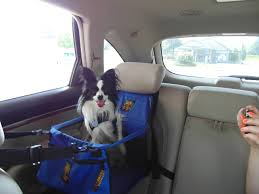 seat belt for your pet or pay a fine hackettstown nj