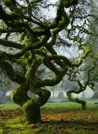 90 best awesome trees images on awesome trees and