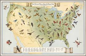 Map With State Names by State Bird And Flower Map Of The United States David Rumsey