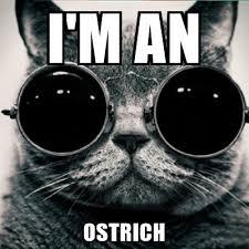 Meme Generator Morpheus - i m an ostrich morpheus cat meme generator