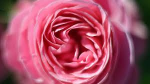 10 hochzeitstag rosenhochzeit 10 hochzeitstag rosenhochzeit frauenzimmer de