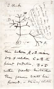 charles darwin tree of sketch from notebook b 1837 reproduced