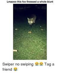Swiper The Fox Meme - best of 罎蜩窶ヲ 25 best memes about swiper no swiping wallpaper site
