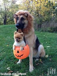 Funny Halloween Costumes Dogs Golden Treasury Funny Adorable Halloween Costumes