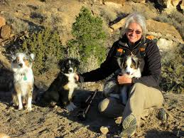 royal 8 australian shepherds mini aussies in colorado a companion and working dog in a small