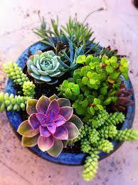 12 gorgeous garden ideas succulents garden gardens and decoration