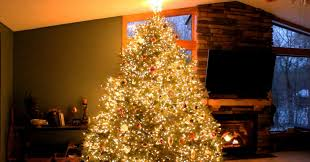 at it seemed like a normal tree but when the