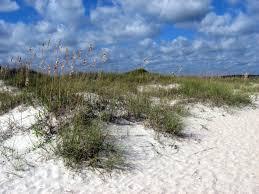 North Carolina vegetaion images Sand dune restoration barrier island ecology uncw JPG