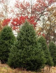 christmas gifts u0026 trees