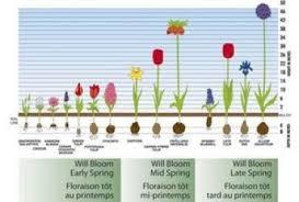 spring bulb garden plans ayebee