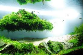 japanese aquascape aquascaping beautiful aquascaping photo collection quertime