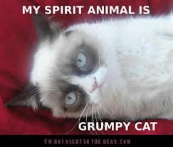 Tard The Grumpy Cat Meme - the spirit of tard tard pinterest grumpy cat cat and funny