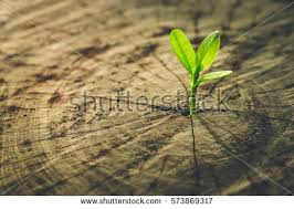 new idea concept seedling growing stock photo 573868387