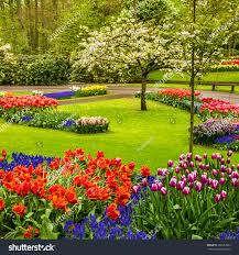 keukenhof flower gardens park keukenhof tulip flower garden holland stock photo 290952863