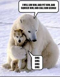 Funny Puppy Memes - 22 best funny puppy memes images on pinterest funny animals funny