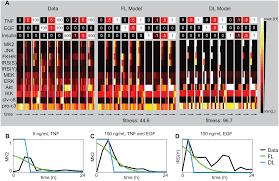 fuzzy logic analysis of kinase pathway crosstalk in tnf egf