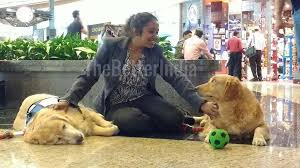 Comfort Retrievers How Animal Angels Foundation Helps People Fight Stress At Mumbai