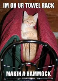 Towel Meme - i m ur towel rack cat meme cat planet cat planet