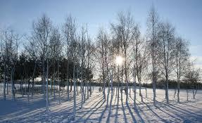 winter gardens ornamental trees