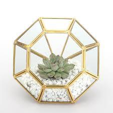 Amazon Succulents Amazon Com Open Diamond Glass Geometric Terrarium Succulent Fern