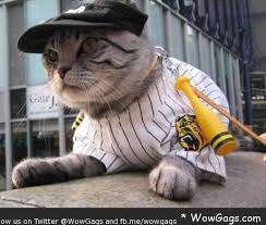 Cat Halloween Costumes Cats 93 Cats Costumes Images Cats Costumes