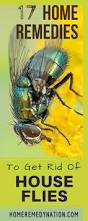 Getting Rid Of Flies In Backyard 17 Unfailing Home Remedies To Get Rid Of House Flies Efficiently