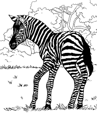 free colouring pages zebra african zebra coloring pages download