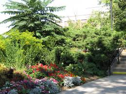 victorian native plants a visual guide to native nebraska landscaping intentional living