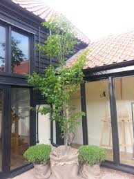 tree hire by botanica plants for any event