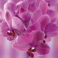 flowers in november the flower of november world love flowers