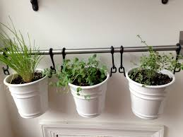apartment herb garden how to make a one pot indoor herb garden