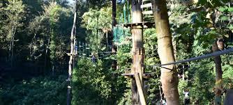 trees adventure glen harrow park