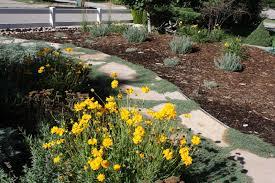 colorado xeriscape gardens all the dirt on gardening 08 10
