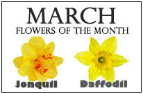 Flowers Of The Month Flowers Of The Month Holidaysmart