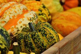 free images fruit orange dish meal food harvest produce