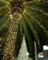 palm tree christmas tree lights palm trees christmas lights it s beginning to look a lot like