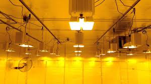 grow room lighting requirements growtech systems commercial grow room gavita youtube