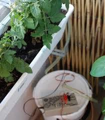build an arduino powered tweeting self watering garden system