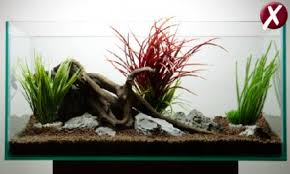 Plants For Aquascaping How To Get Your Aquascape Right First Time U2014 Practical Fishkeeping