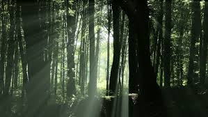 Deep Forest Green Sun Shines Through Leaves In Mysterious Deep Forest Magical