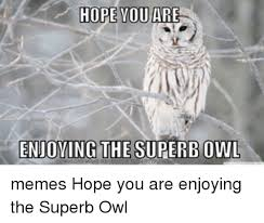 White Owl Meme - hope you are enjoying the superbowl memes hope you are enjoying the