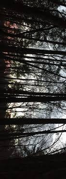 night hike lyrid meteor shower u2013 autrey mill