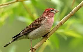 宽屏小鸟 fancy birds hd wildlife birds photography 1680x1050