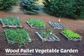 pallet vegetable gardening