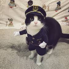 cute pet dog cat clothes funny puppy police officer christmas