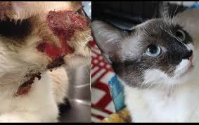 Cat Treehouse Everyday Miracles Wounded Cat Brought Back To Life Life With Cats