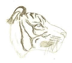 tiger side sketch by chinook16 on deviantart