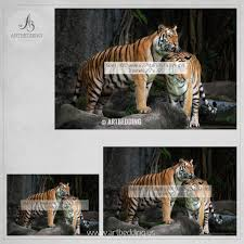 Peel And Stick Wallpaper Reviews by Tiger Wall Mural Wild Tiger Self Adhesive Peel U0026 Stick Photo