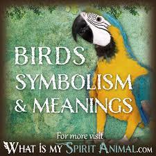 bird symbolism u0026 meaning spirit totem u0026 power animal