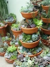 Cactus Garden Ideas Best Cactus Garden Designs Home Design Wonderfull Creative